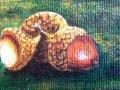 mini 3 acorns.JPG